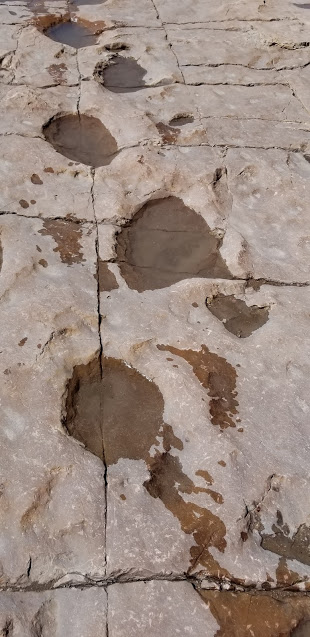 Sauropod tracks with my footprints next to them
